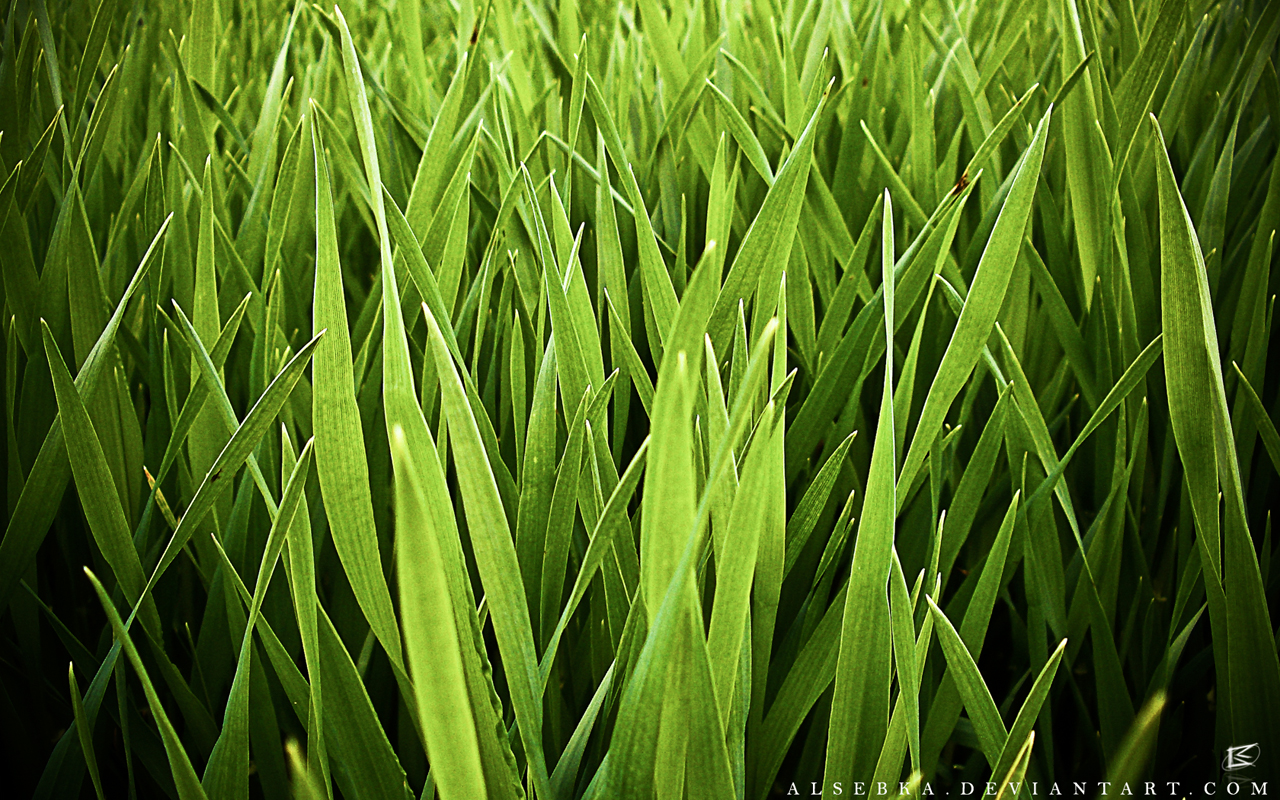 Damien Wallpapers: Grass and Field Wallpaper