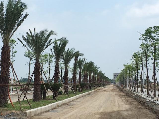 Hạ tầng cây xanh đô thị trong nội khu đô thị Thanh Hà Cienco5 Mường Thanh Hà Đông