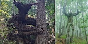 Árvores que se parecem com outras coisas e vai fazer você olhar duas vezes