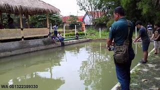 Umpan Serbuk Ikan Mas Harian