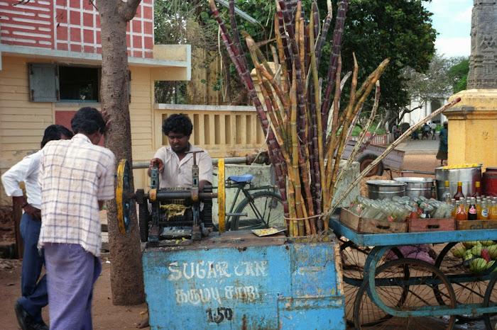 Pondichéry, canne à sucre, © L. Gigout, 1990