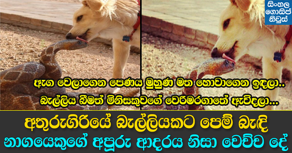 Snake and Dog Love story in Athurugiriya