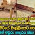 Snake and Dog Love story in Athurugiriya