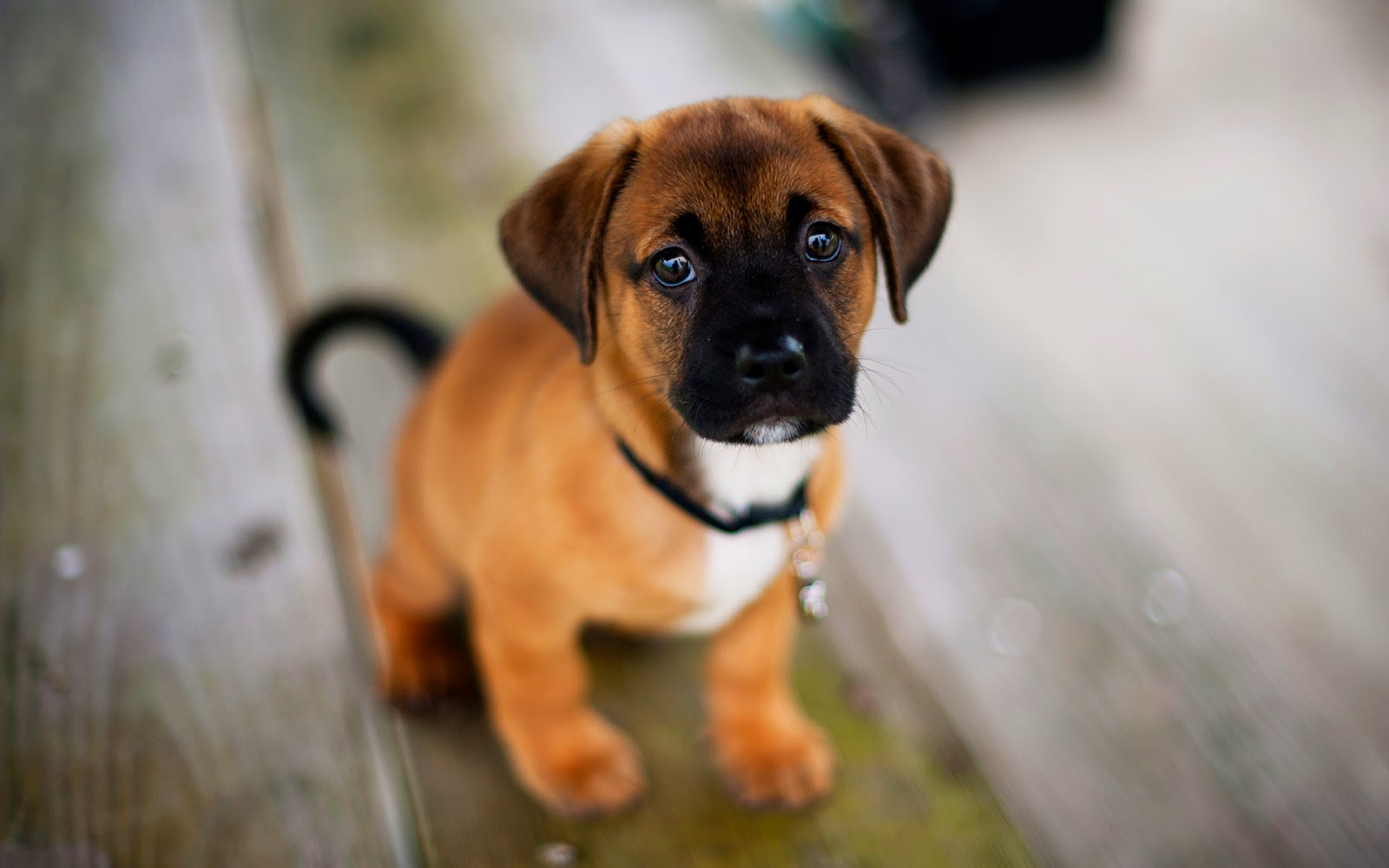 Dog Hd Wallpapers Free Download For Pc Online Fun