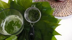 The Amazing Health Benefits Of Betel Leaf For Health And Beauty - Healthy T1ps