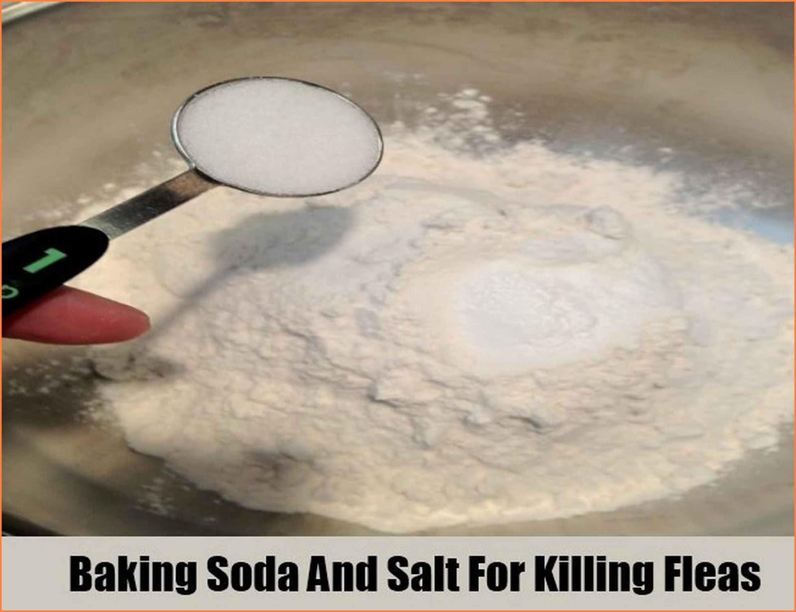Killing Fleas In Carpet Home Remedies Caraway Seeds