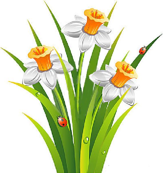Imagini Cu Narcise Colorate Fise De Lucru Gradinita