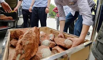 Total 43 Telur Dinosaurus Ditemukan di China
