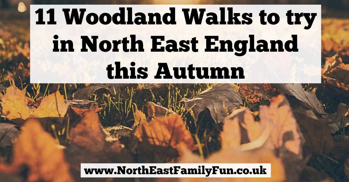 11 Woodland Walks to try in North East England this Autumn