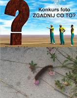 http://misiowyzakatek.blogspot.com/2014/10/zgadnij-co-to-czyli-zabawa-foto-cz-8.html