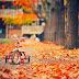 Outono começa com tempo instável e temperaturas amenas