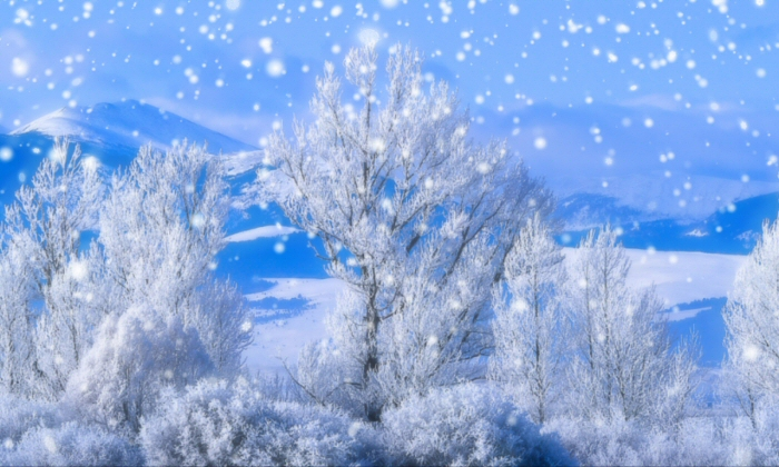 Snow falling wallpapers landscape wallpapers hd - Free screensavers snowflakes falling ...