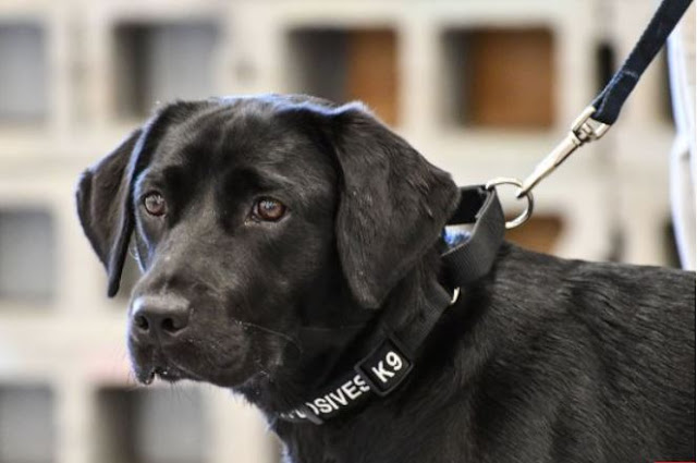 A C.I.A Bomb Sniffing Dog Was Fired Because She Didn't Want To Sniff Bombs Anymore