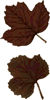hojas,secas,otoño,autumn,leaves,png,recursos,photoshop,gimp,scrap