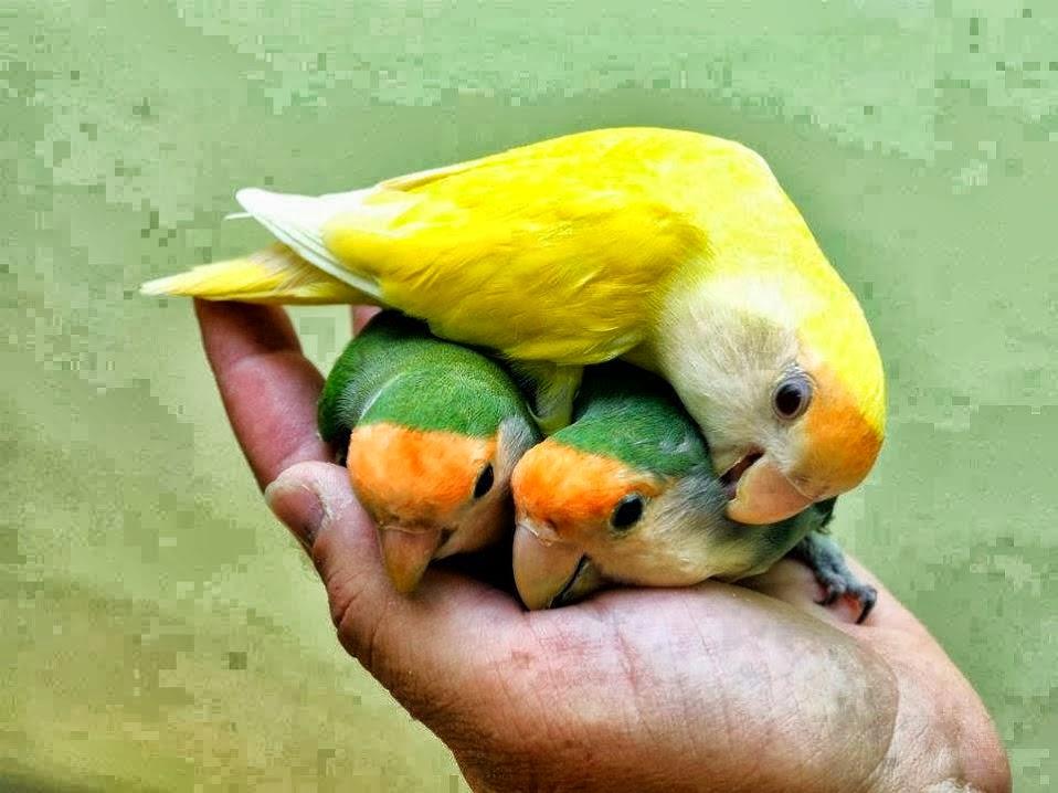 best birds: birds information