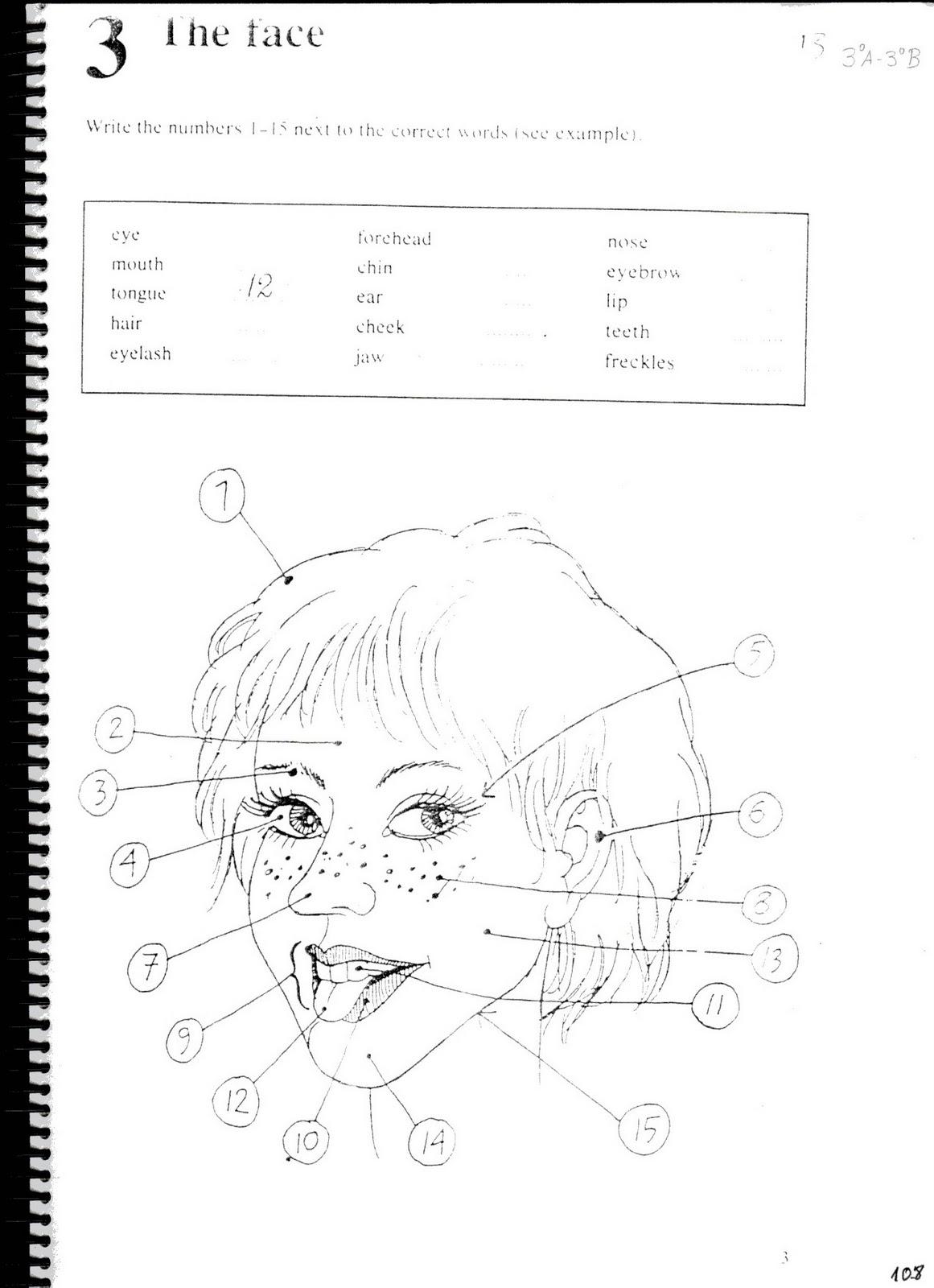 Fichas De Ingles Ficha Face 12 Face Worksheets For Kids