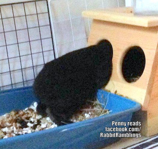 Long Island Rabbit Rescue Facebook