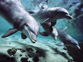 The Dark Secrets of Dolphins