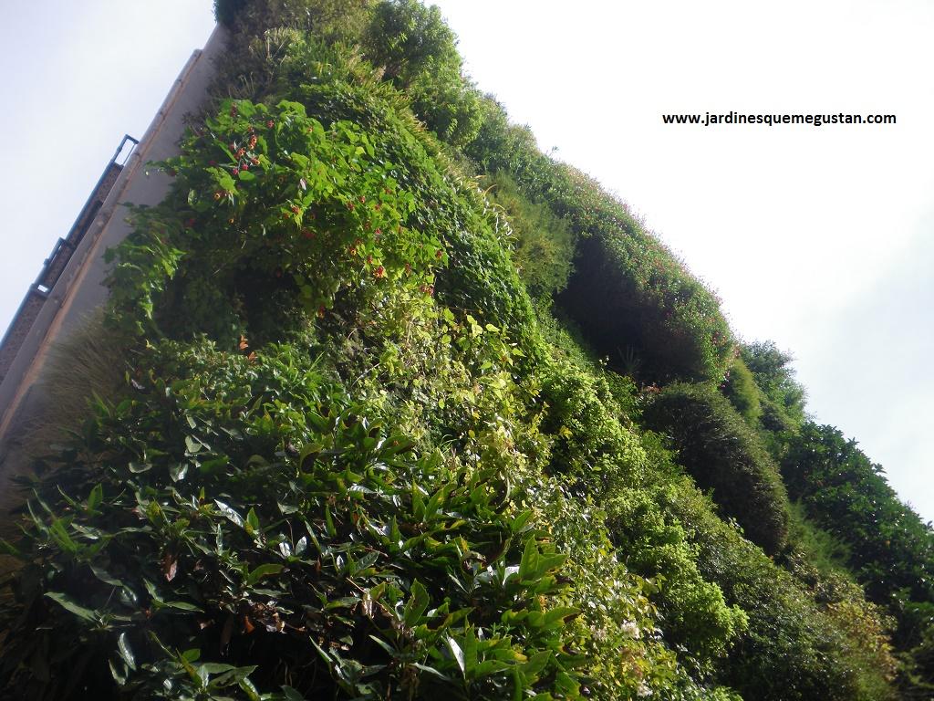 Jardines que me gustan retrospectiva del jard n vertical for Jardin vertical madrid