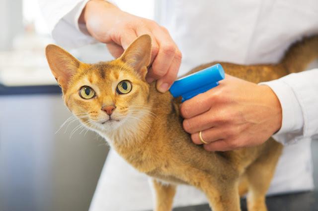 В Башкирии домашних животных будут чипировать