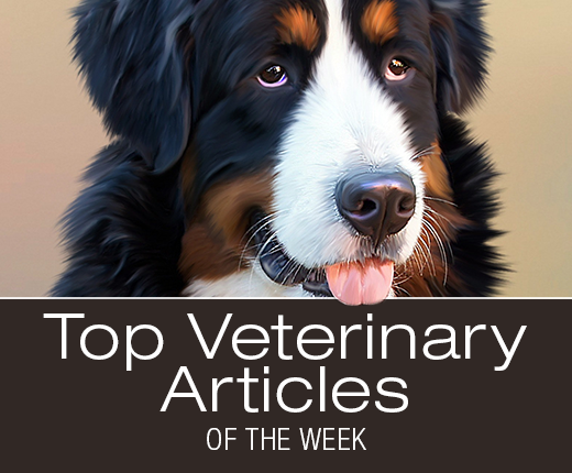 Top Veterinary Articles of the Week: Vaccination Protocol, Parvo Treatment, and more ...