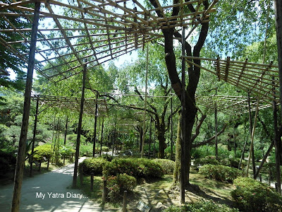 Cluster of trees at the Heian Jingu shrine garden, Kyoto in Japan