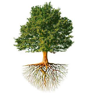 ağaçlar hakkında bilinmeyen gerçekler