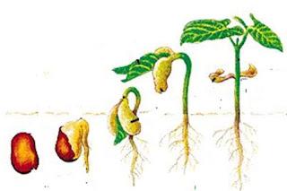 Faktor yang Mempengaruhi Pertumbuhan dan Perkembangan Hewan, Manusia dan Tumbuhan