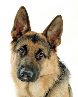 German shepherd name origin