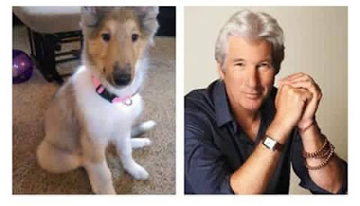 Richard Gere con cachorro