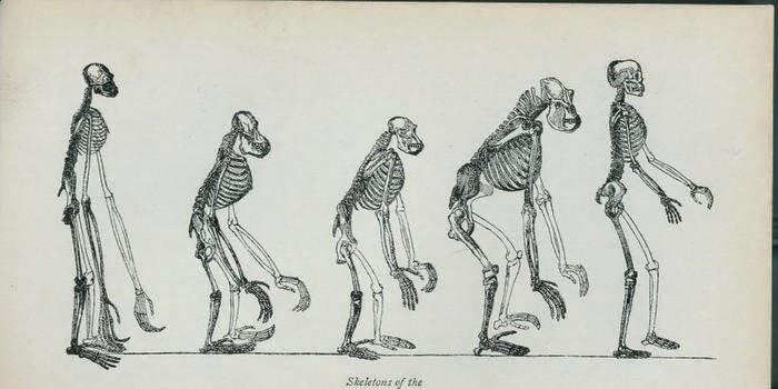 Digitalización de los manuscritos del creador de la teoría de la evolución, Charles Darwin.