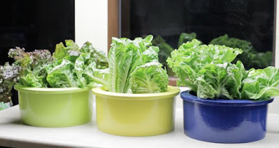 Best Ways To Grow Herbs Indoors - Grow Floats Hydroponics