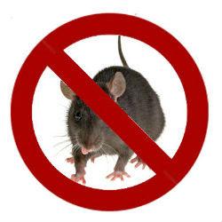 6 Cara Bisa Mengusir Tikus Terbaru Yang Praktis
