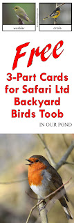FREE 3-Part Cards for Safari Ltd Backyard Birds Toob from In Our Pond