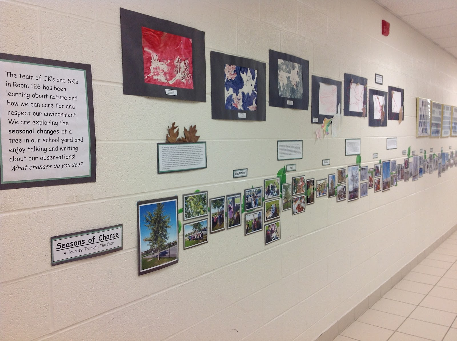 Our Kindergarten Journey Environmental Inquiry In Action
