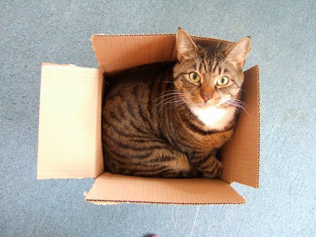 Why Cats Like Boxes So Much   The Ark In Space
