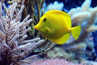 Makanan Ikan Hias Air Laut