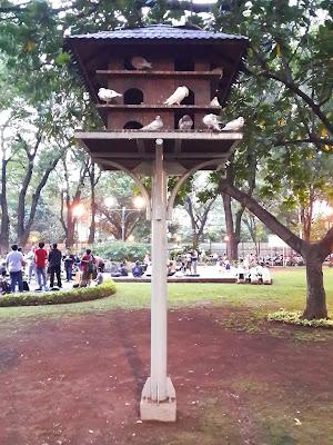 Piknik, Taman, Suropati, Burung, Merpati