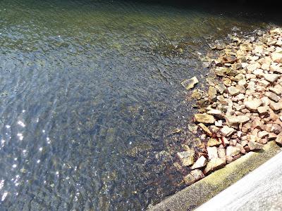 天保山公園 安治川の河口