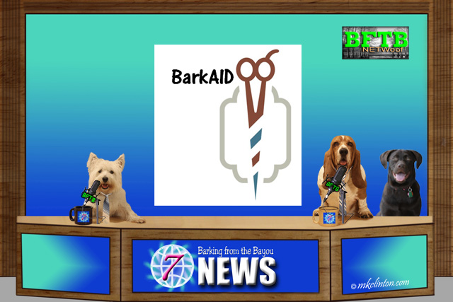 BFTB NETWoof News with BarkAID