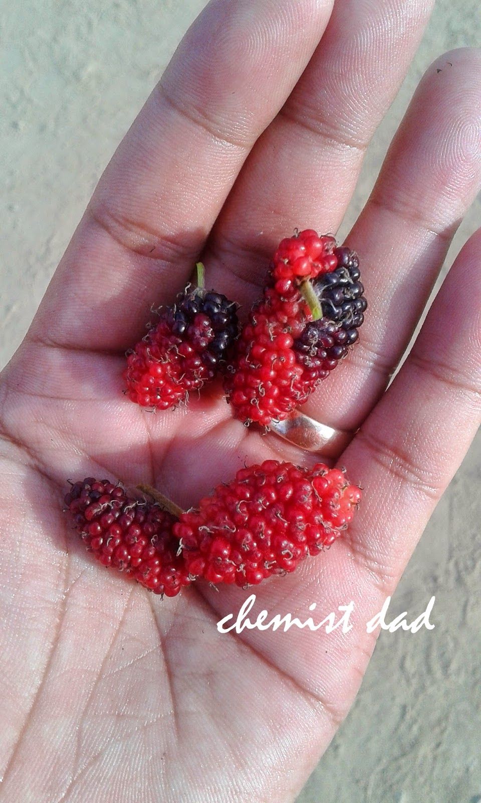 health benefits of mulberry, herbal plant, mulberry, naturopathic remedies,
