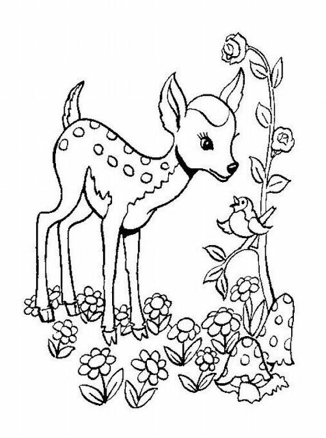 cervo, animali, foresta,