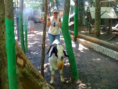 Goat at Zoobic Safari Adventure