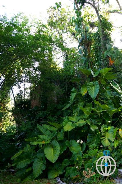 kuba soroa botaniczny ogród