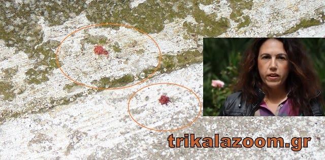 Τρίκαλα: Έσφαξε την γυναίκα του μπροστά στα μάτια της κόρης τους