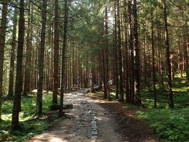 Niebieski szlak Kuźnice - Hala Kondratowa
