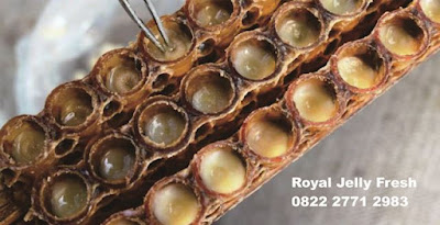 royal jelly palangkaraya, penjual royal jelly dipalangkaraya, supplier royal jelly dipalangkaraya, tempat jual royal jelly dipalangkaraya, royal jelly kalimantan, penjual royal jelly dikalimantan tengah, royal jelly balikpapan, tempat jual royal jelly di balikpapan, harga royal jelly dibalikpapan, royal jelly samarinda, penjual royal jelly disamarinda, tempat jual royal jelly di samarinda, royal jelly singkawang, tempat jual royal jelly disingkawang, beli royal jelly disingkawang, supplier royal jelly disingkawang, royal jelly bontang, jual royaljelly dibontang, tempat jual royal jelly dibontang, harga royal jelly dibontang, royal jelly bajarmasin, jual royal jelly dibanjarmasin, tempat jual royal jelly dibanjarasin, harga royal jelly dibanjarmasin, supplier royal jelly banjarmasin, royal jelly pontianak, supplier royal jelly pontianak , tempat jual royal jelly dipontianak, harga royal jelly dipontianak, royal jelly tarakan, penjual royal jelly ditarakan, tempat jual royal jelly ditarakan, supplier royal jelly tarakan, harga royal jelly di tarakan, royal jelly banjar baru, tempat jual royal jelly banjar baru, supplier royal jelly banjarbaru, harga royal jelly dibanjarbarum penyedia royal jelly banjarbaru, distributor royal jelly banjar baru