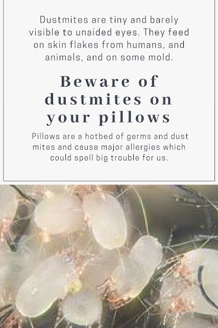 beware of dsutmites on your pillows. Dustmites - magnified view