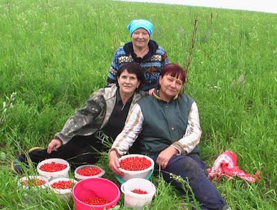 Татьяна Ошарина на сборе земляники с подружками