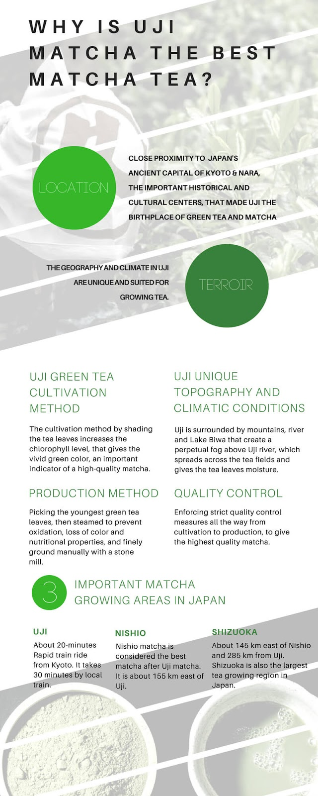 uji matcha the best matcha infographic